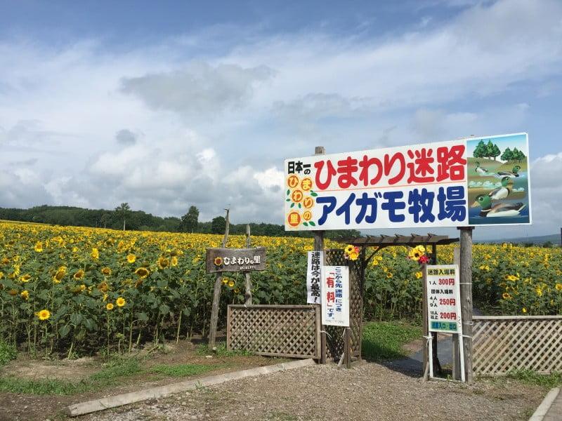 北竜町向日葵花田