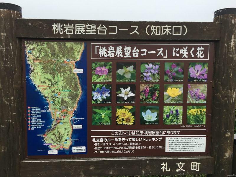 禮文島的花