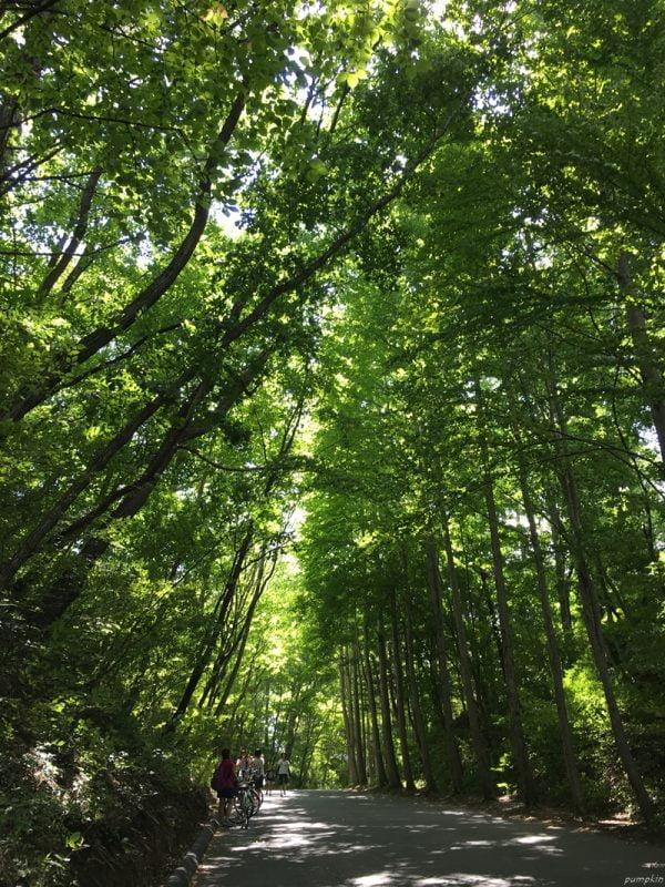 輕井澤高原