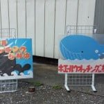 高知賞豚和鯨魚