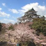 和歌山城賞櫻