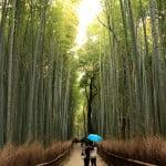 京都嵐山 - 嵐山竹林