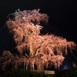 京都必到景點 - 圓山公園