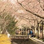 京都必到景點 - 晢學之道