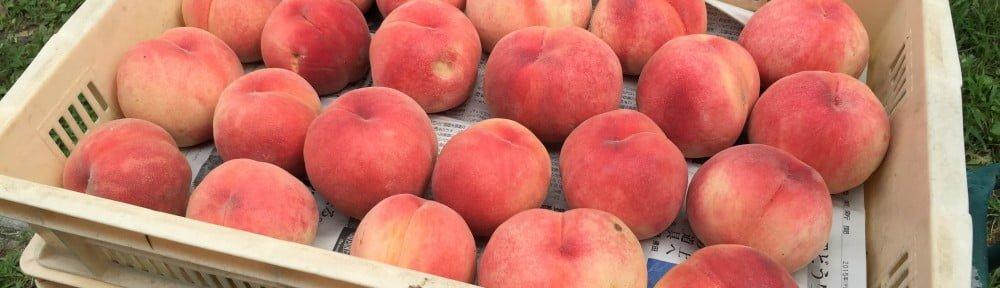 又紅又大的桃