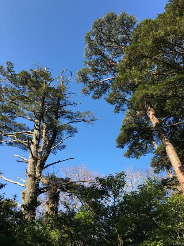 沿途很多大樹