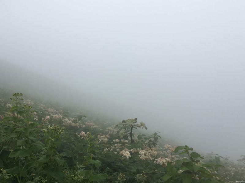在雲霧中行走