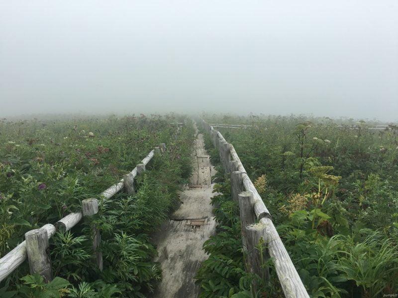 在雲霧中繼續行走