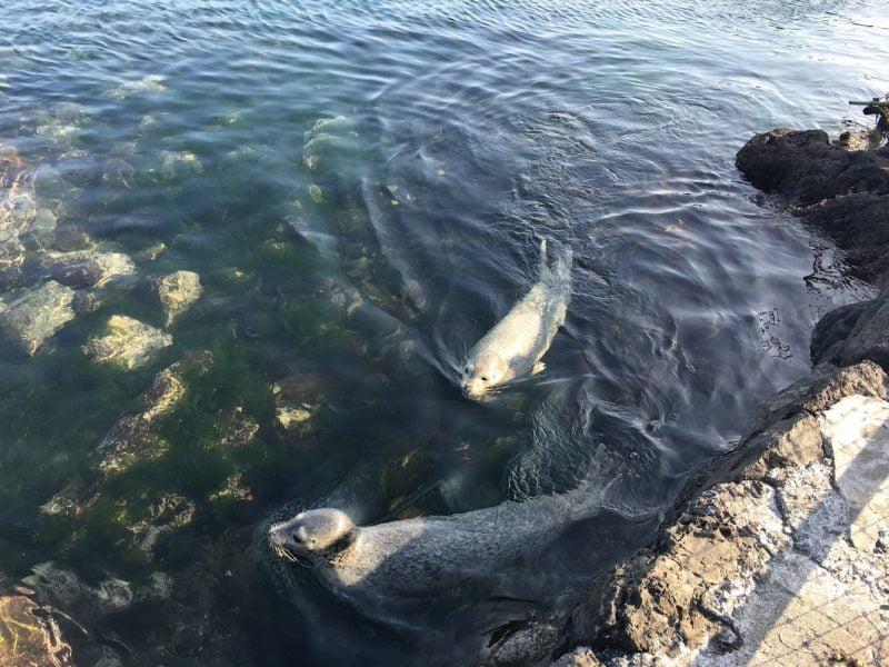 海豹養殖池