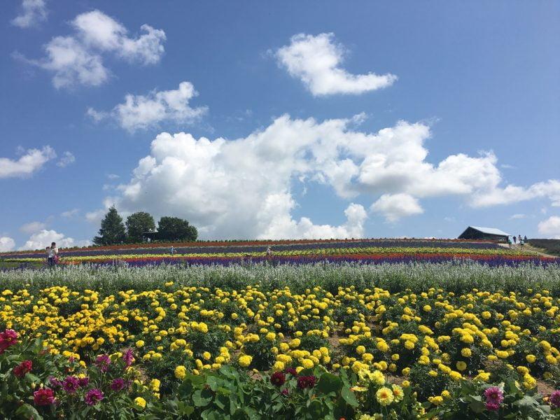 Kanno Farm
