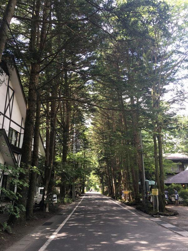 輕井澤的林蔭大道
